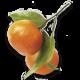 Savon liquide de Marseille mandarine 300 ml Coslys