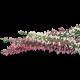 Mousse nettoyante Peaux à tendance grasse Coslys